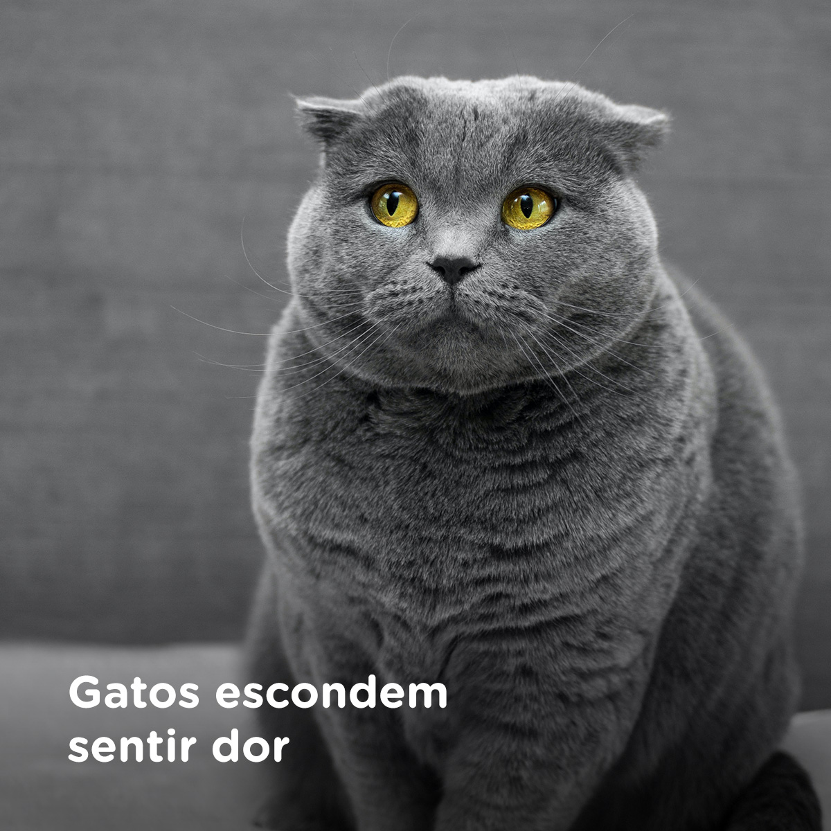 Gatos escondem sentir dor