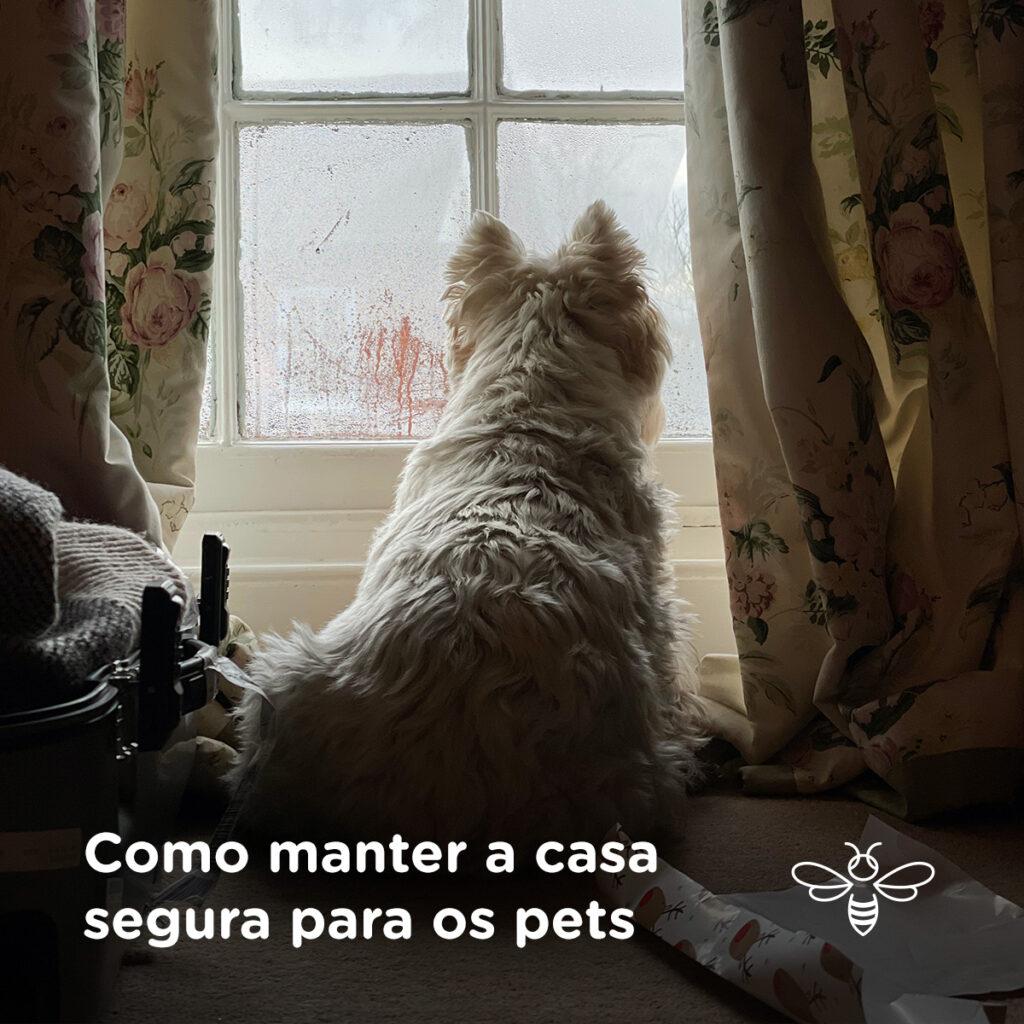 Como manter a casa segura para os pets