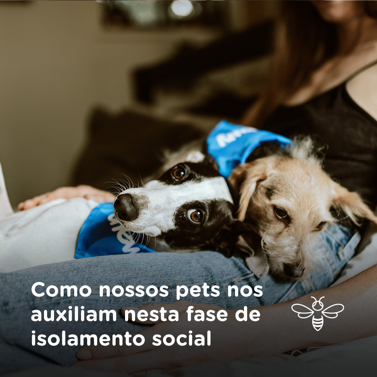 Como nossos pets nos auxiliam nesta fase de isolamento social