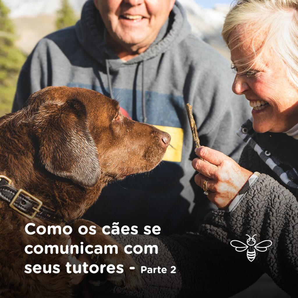 Como os cães se comunicam com seus tutores - parte 2