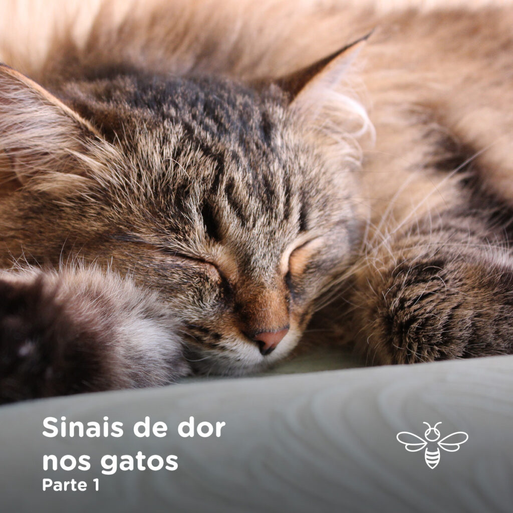 Sinais de dor nos gatos