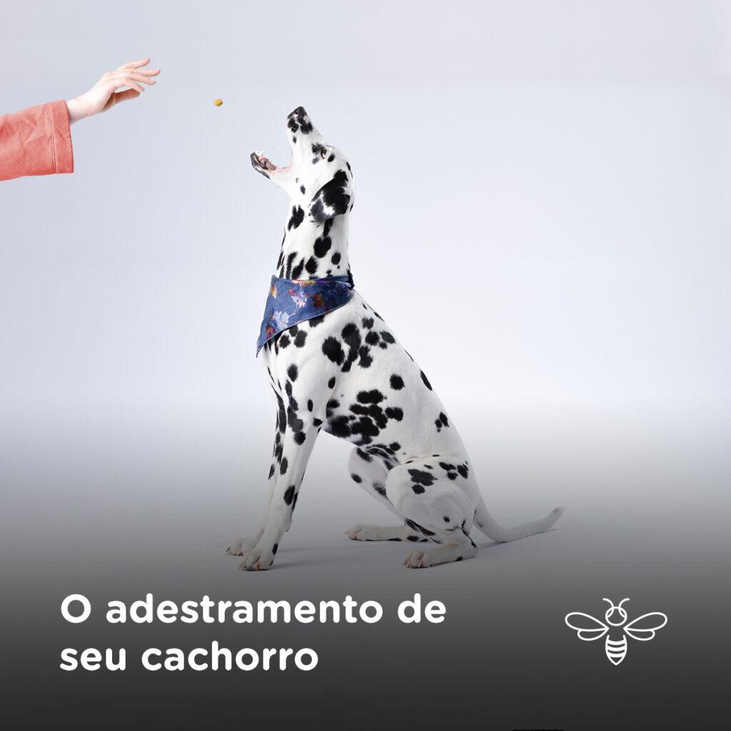 O adestramento de seu cachorro
