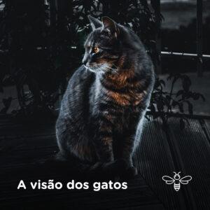 A visão dos gatos