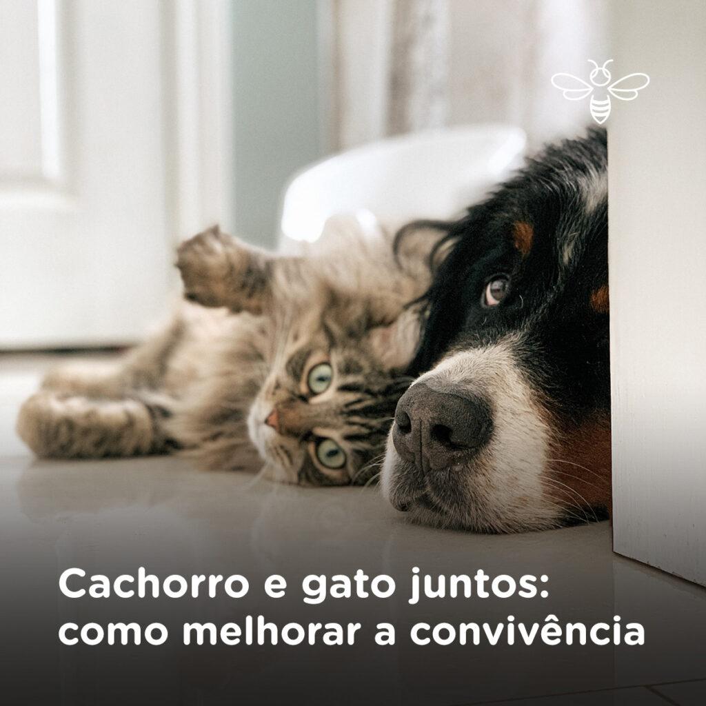Cachorro e gato juntos como melhorar a convivência