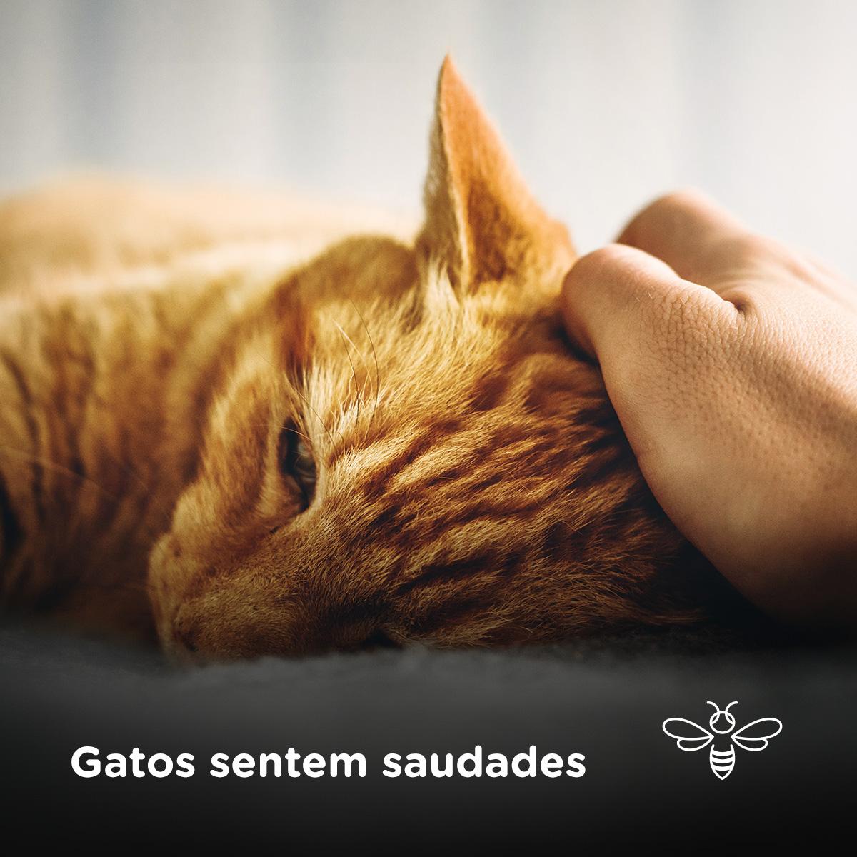 Gatos sentem saudades