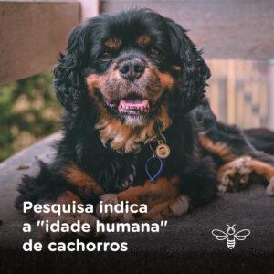 Pesquisa indica a idade humana de cachorros