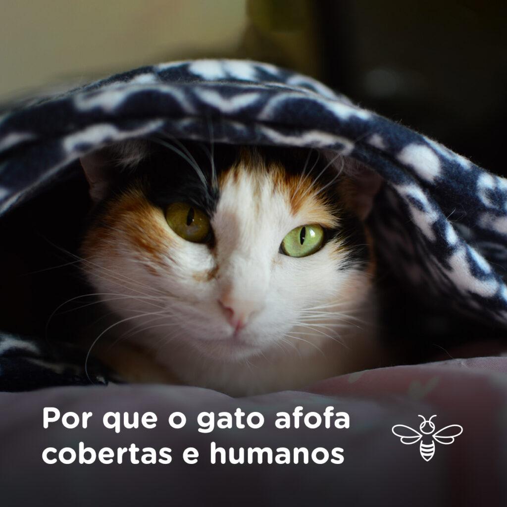 Por que o gato afofa cobertas e humanos