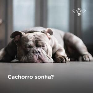 Cachorro sonha