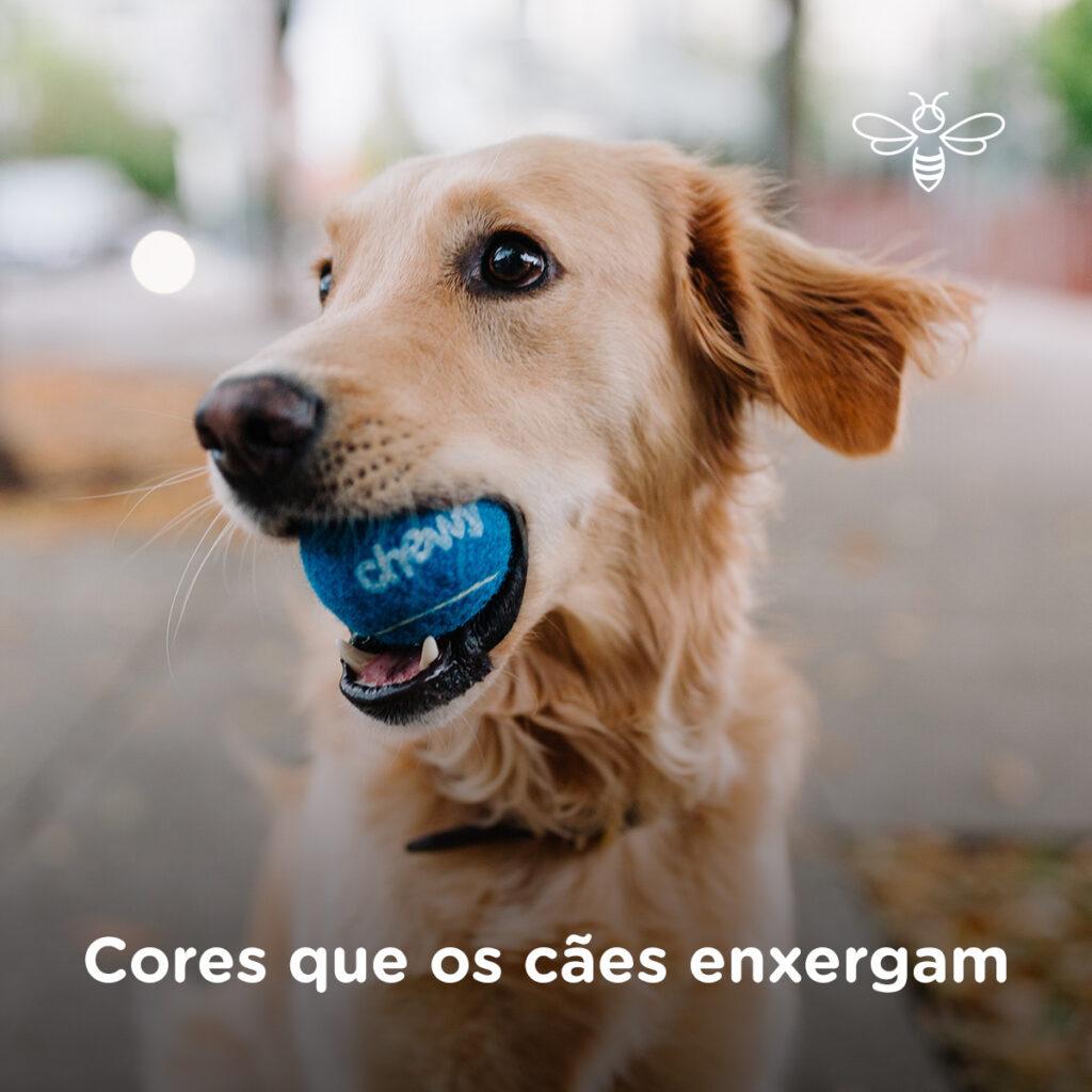Cores que os cães enxergam segundo estudos científicos