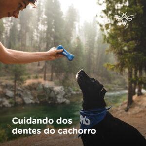 Cuidando dos dentes do cachorro