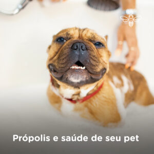 Propolis e saude de seu pet