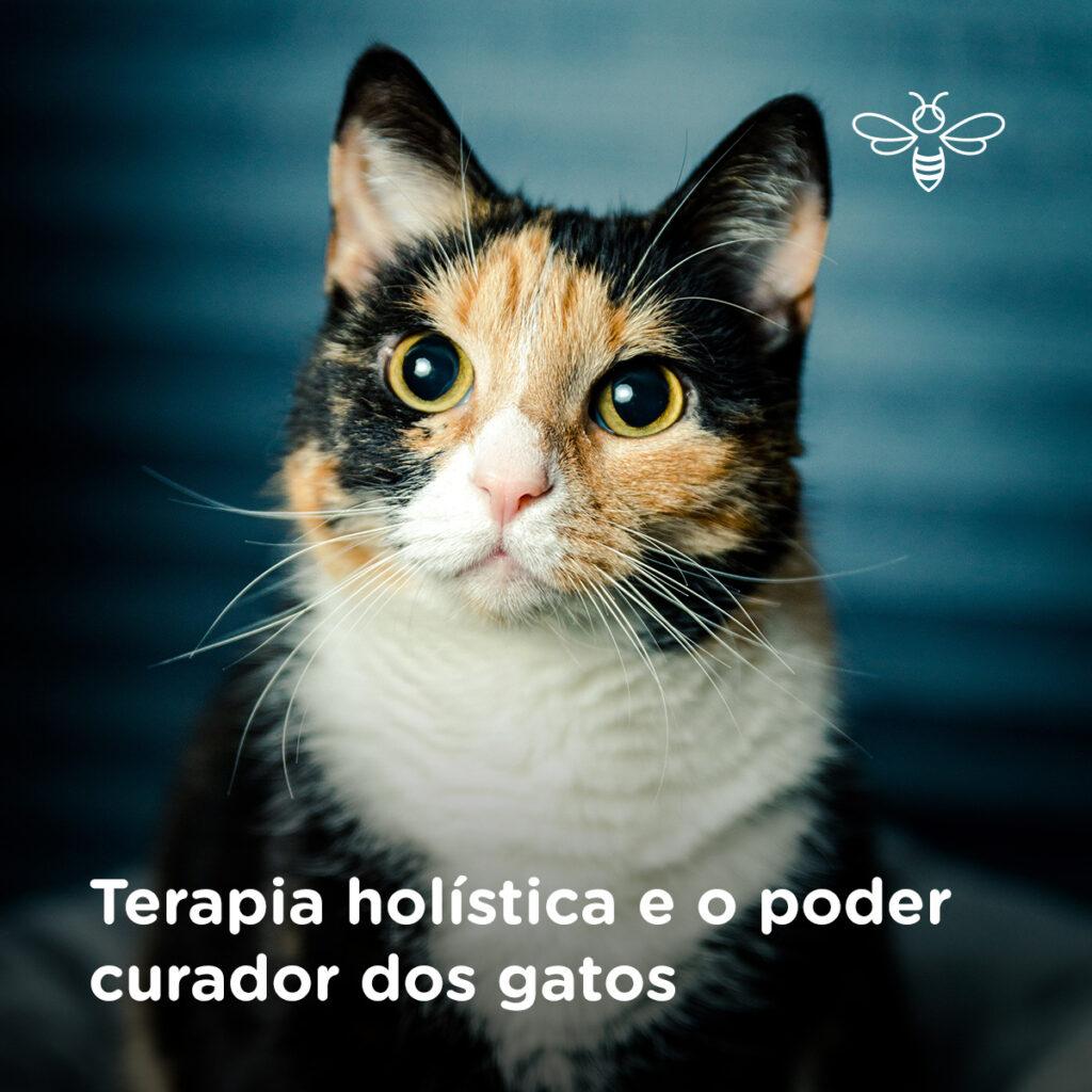 Terapia holística e o poder curador dos gatos