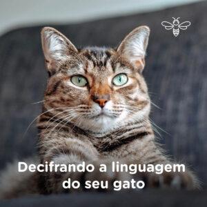 Decifrando a linguagem do seu gato