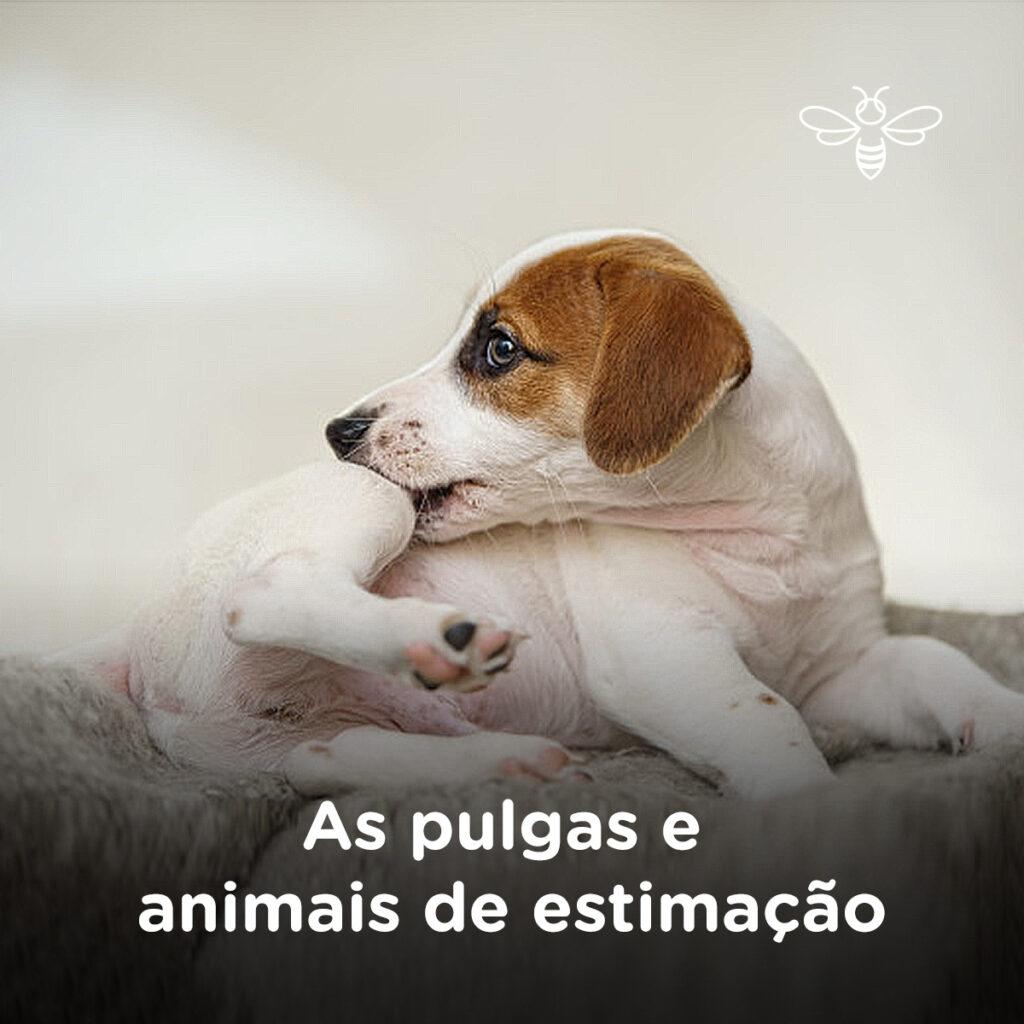 As pulgas e animais de estimação