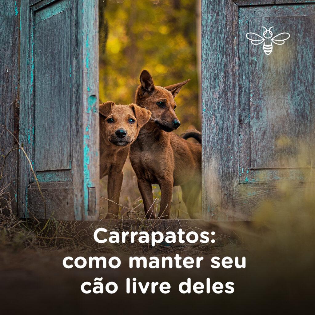 Carrapatos como manter seu cão livre deles