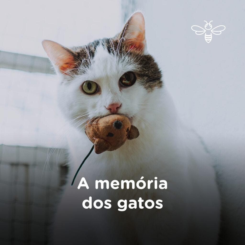A memória dos gatos